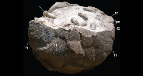 A dinosaur egg with preserved wasp cocoons inside