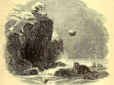 An engraving of a polar bear hurling a rock at a walrus from Charles Francis Hall's 1865 book Arctic researches, and life among the Esquimaux.