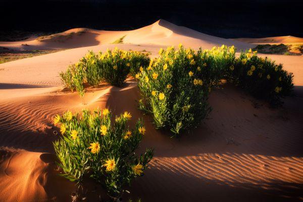 Dune Shadows thumbnail