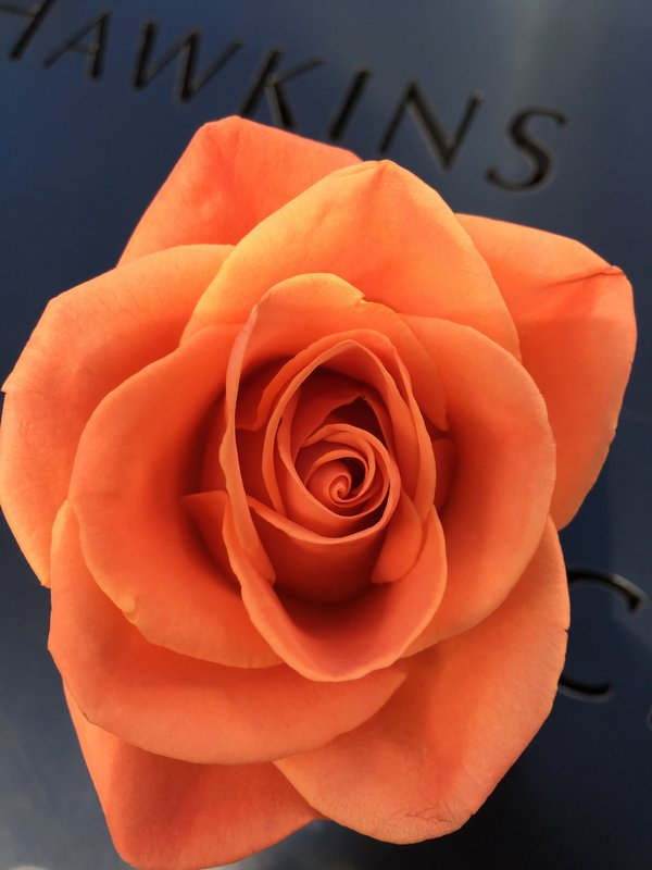 A flower laid as tribute on the 9/11 Memorial names thumbnail