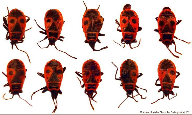 Chernobyl's Bugs: The Art And Science Of Life After Nuclear Fallout
