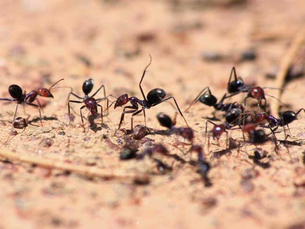 Ant lifting leg
