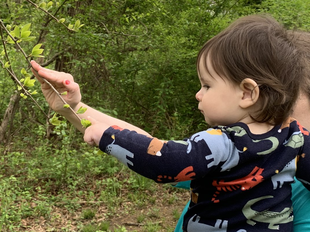 Child in mothers arms reaches to touch a tree branch