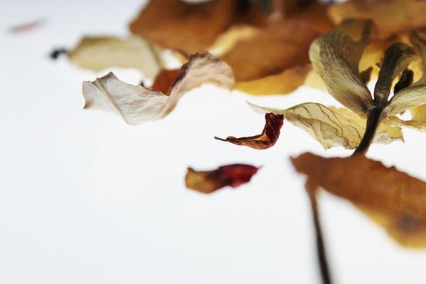 Les Fleurs #14 thumbnail