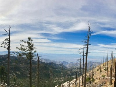 In the Catalina Mountains in southern Arizona, forests struggle to keep up with recent increases in drought and wildfire activity, which are expected to continue due to human-caused climate change.
