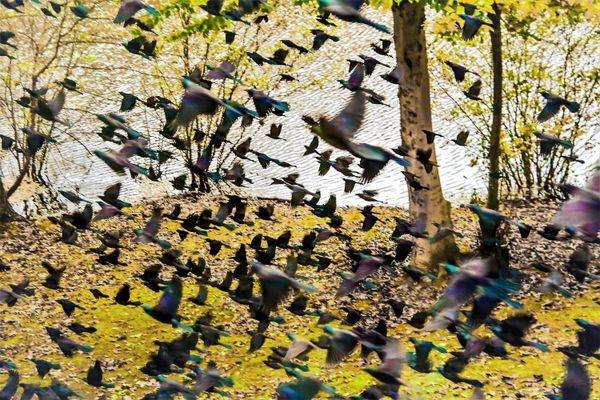 Sounds of birds thumbnail