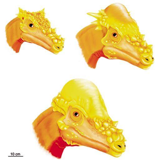 dinosaure species