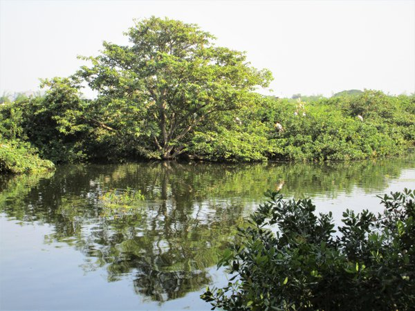 Vedanthangal Bird Sanctuary thumbnail
