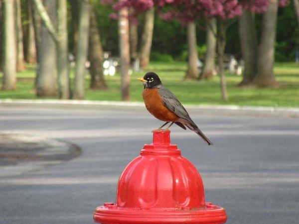 Robin in the Park thumbnail