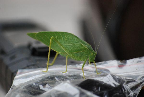 Grasshopper thumbnail