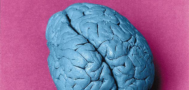 Leborgne's brain