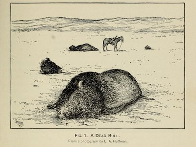 """After L. A. Huffman, """"A Dead Bull"""" from William T. Hornaday, """"The Extermination of the American Bison, with a Sketch of Its Discovery and Life History,"""" Annual Report of the Smithsonian Institution for the Year Ending June 30, 1887, part 2 (1889): pl. IX."""