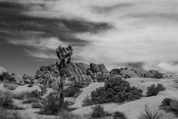 Cloudy scenary in Joshua Tree thumbnail