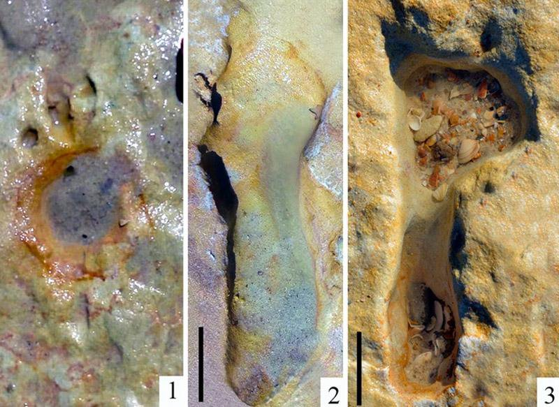 100,000-Year-Old Fossilized Footprints Track Neanderthals' Trip to Spanish Coast