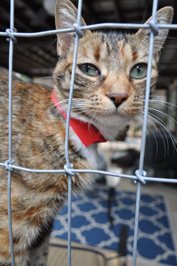 Shelter Life cat thumbnail