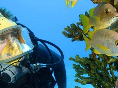 cousteau-631.jpg