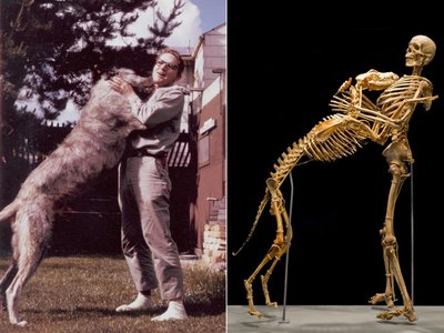 As the first serious scientist to study the legendary creature, Krantz risked his career and reputation on a subject that many consider a joke. And while the museum remembers him as a man who loved science so much that he donated his body to it, another community remembers Krantz as a pioneer in the study of Sasquatch.