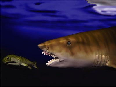 An illustration of the ancient shark Edestus heinrichi preying on a fish. Many ancient sharks had different jaws than modern sharks.