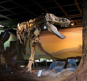 20110520083240Tyrannosaurus-skeleton-300x281.jpg