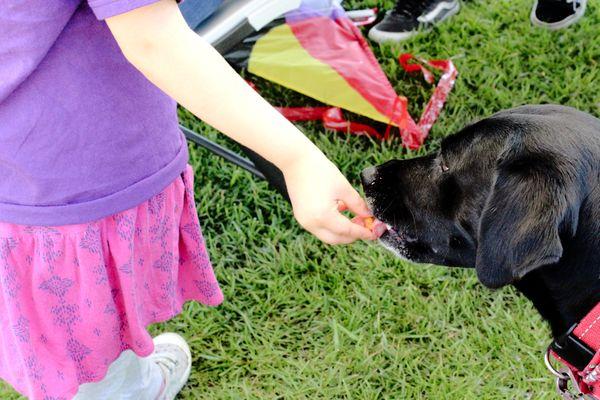 A child sneaks scraps to a dog thumbnail