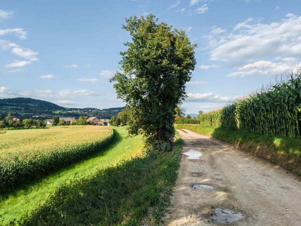 In Austria. Summer thumbnail