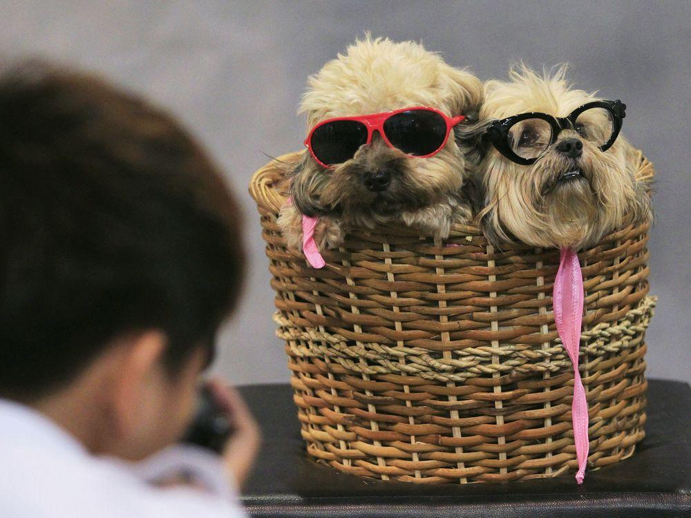 08_11_2014_dogs.jpg