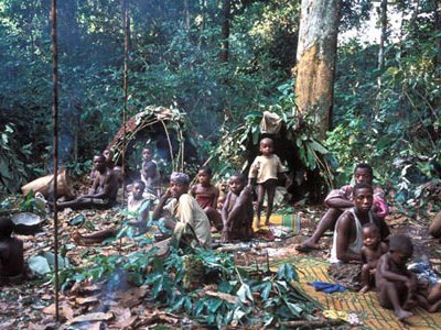 Equatorial Africa's rain forests have sustained Pygmies for millennia.  Now other peoples are competing for the forests' resources, displacing the Pygmies.