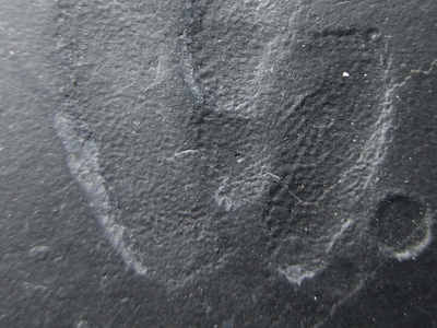 Conditions were ripe for fossil-making when this tiny dinosaur walked through the mud some 120 million years ago. In the lower right corner of this image, you can even see splash mark from a rain droplet.