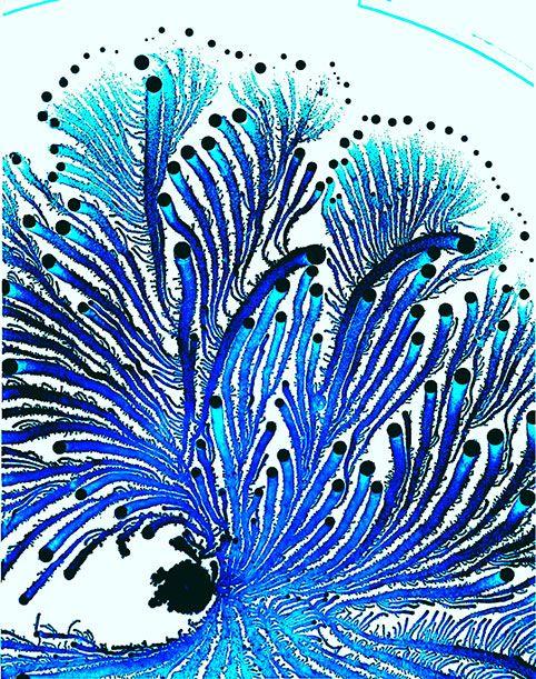 Colonies of Growing Bacteria Make Psychedelic Art