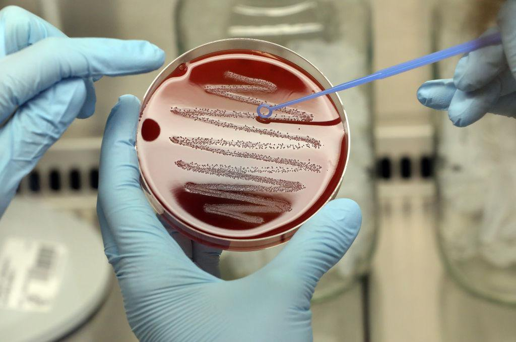Harmful Bacteria Masquerade as Red Blood Cells to Evade the Immune System