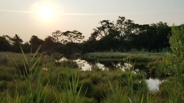 Tidal saltwater marshes at sunrise thumbnail