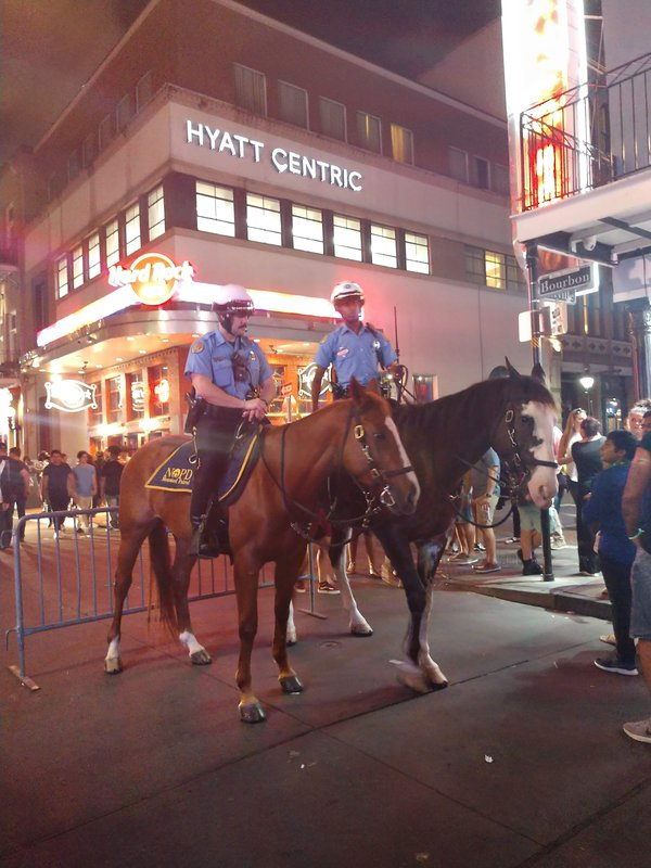 Equine officers on Bourbon Street thumbnail