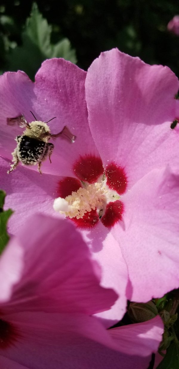 Happy Bumblebee thumbnail