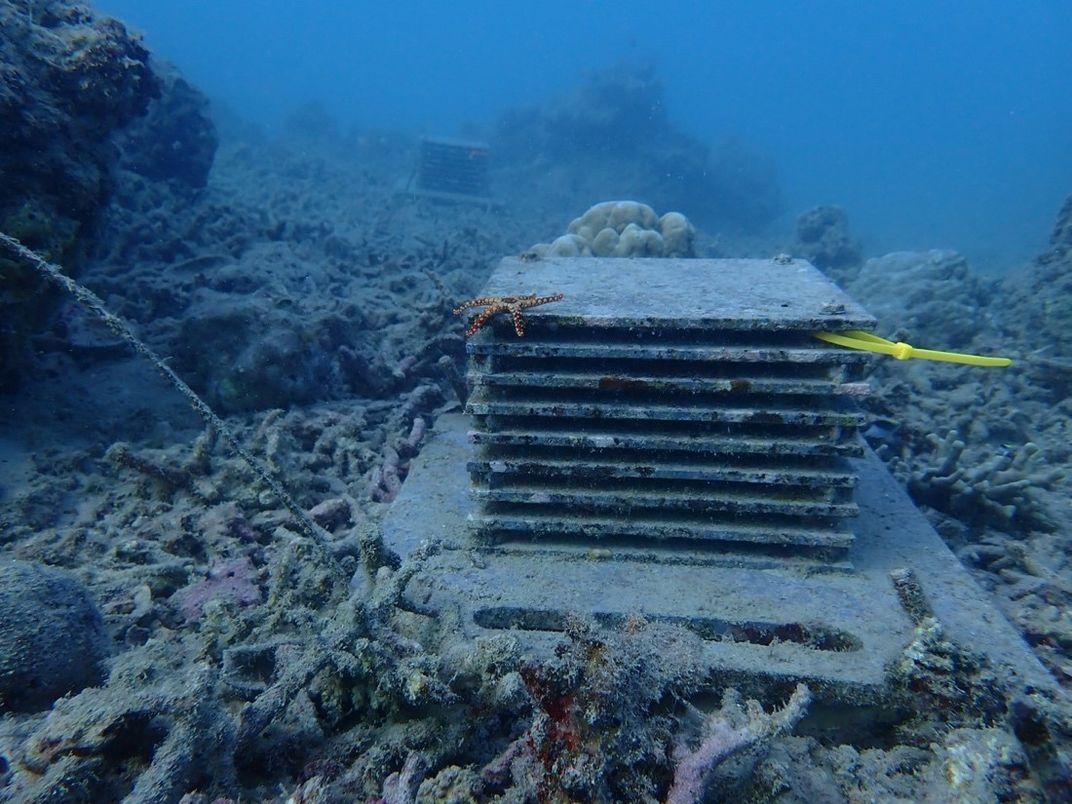 PVC stack on the ocean floor
