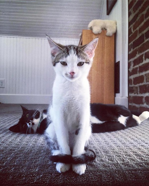 The Cats Pose for their Portrait thumbnail