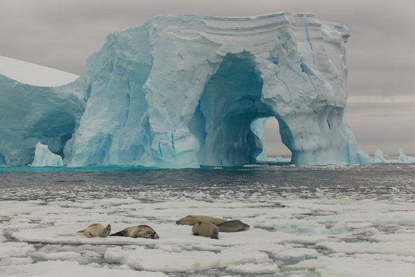 A group of crabeater seals and the castle of ice thumbnail