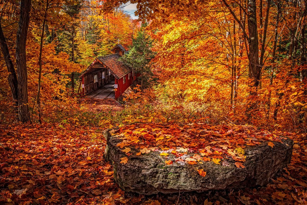 See When Fall Foliage Will Peak With This Interactive Map