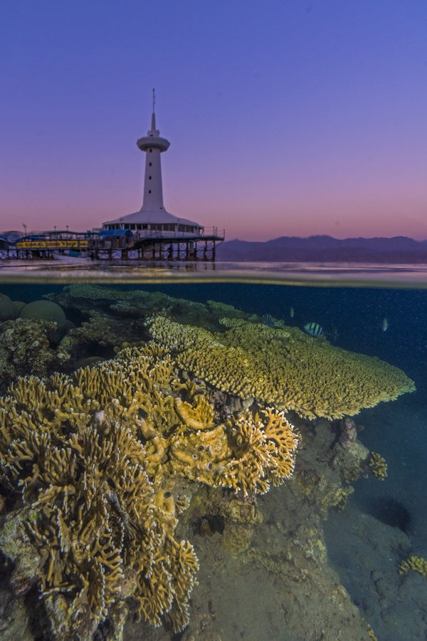 Coral reefs of Eilat, Red Sea, and an Underwater Observatory thumbnail