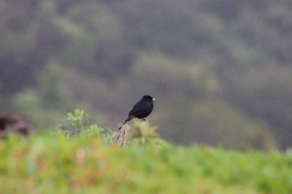 Bird in the rain thumbnail