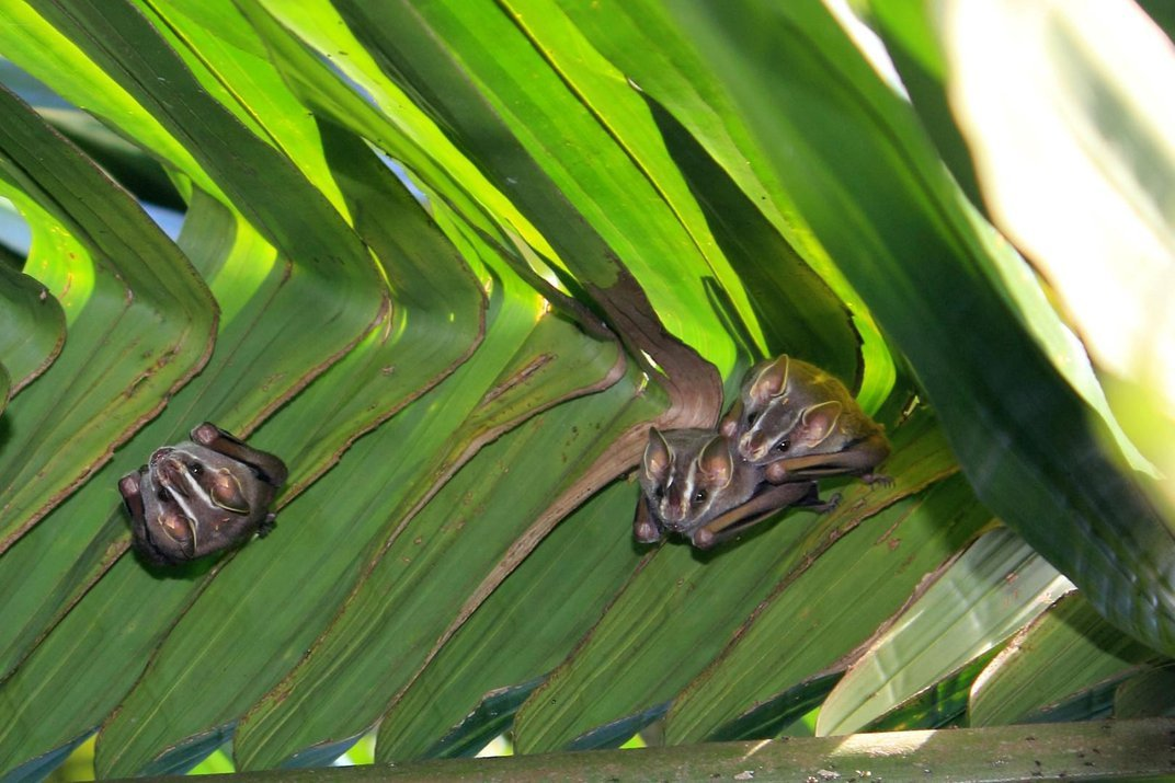 Mama Bats Literally Nudge Their Babies Out of the Roost