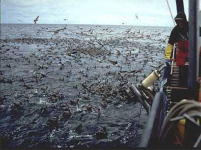 Seabirds with longline fishing vessel
