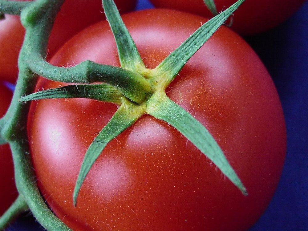 Tomate_gelber_Blütenkelch2.jpg