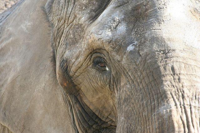 2013112912003211_29_2013_forest-elephant.jpg