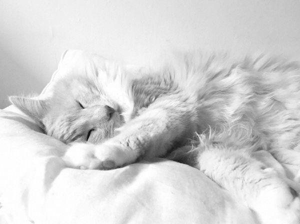 Cat Nap thumbnail