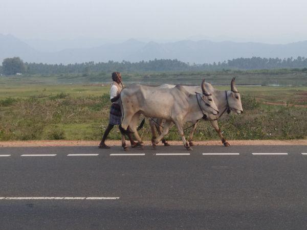 former in national highway in madhurai to kodaikanal thumbnail