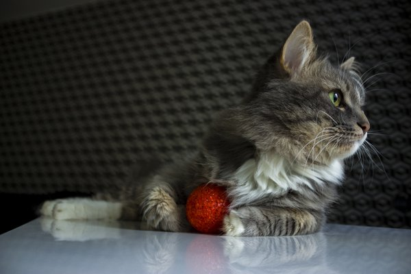 Cat Bars and his favorite red ball thumbnail
