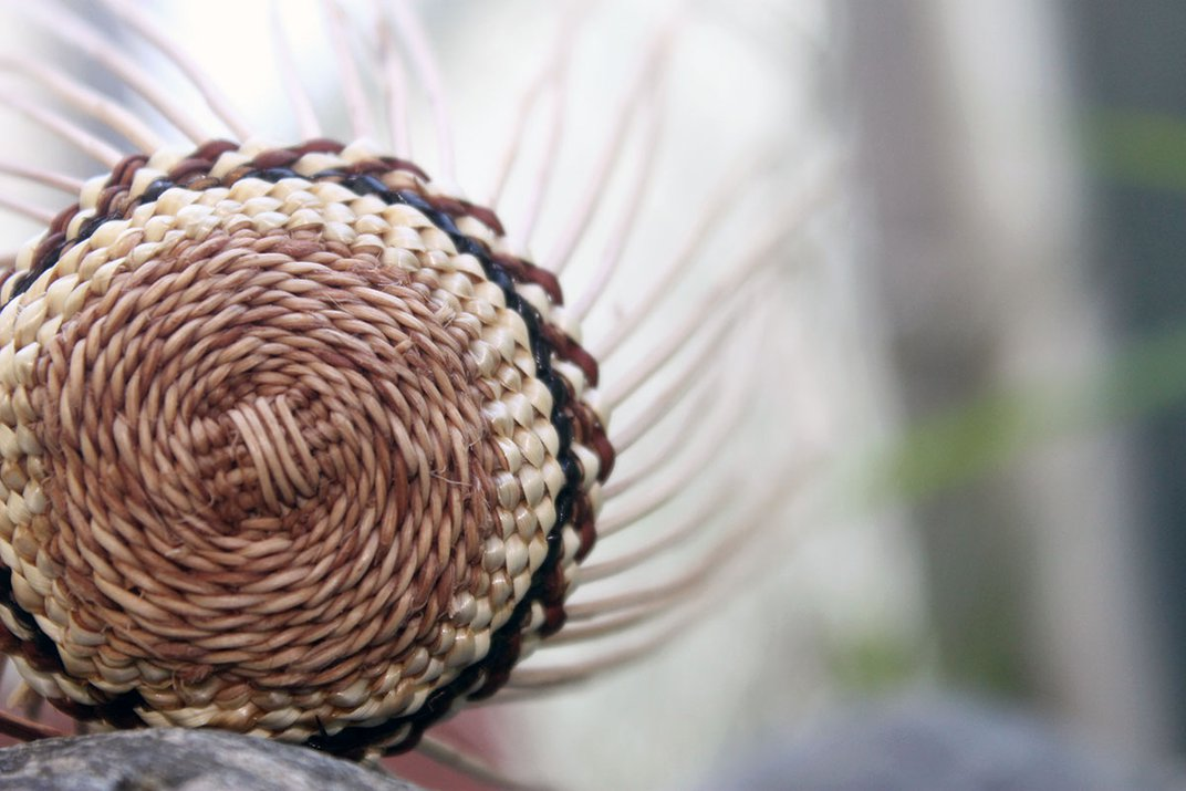 Closeup on the bottom of a woven grass basket in process.