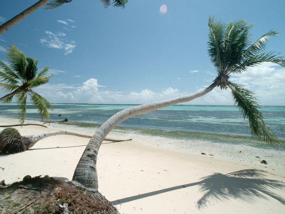Kiribati Trees