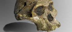 The Australopithecus africanus fossil, Mrs. Ples, was indeed female.