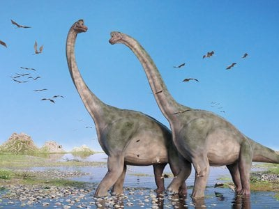 New evidence has made scientists rethink sauropods as being purely land dwellers. (dottedhippo/iStock/Thinkstock)